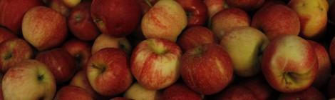 Trip to Saratoga Apple